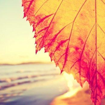 Калькулятор отдыха: проводим осень на пляже – изучаем туры в Египет, Израиль и Эмираты