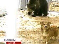 Центр экотуризма в Станьково готовится к новогоднему буму