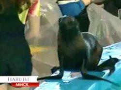 Минский дельфинарий празднует день рождения