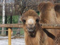 Интересно ли зимой в Минском зоопарке?