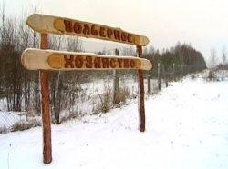 В Беларусь завезли горных баранов