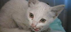 Белорусские туристы в ОАЭ спасли попавшего под машину котенка
