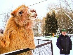 Посещаемость столичного зоопарка растет с каждым годом