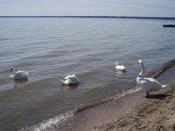 Национальный парк «Нарочанский»: В Год гостеприимства с новыми маршрутами