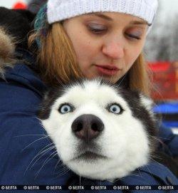 Международные соревнования по зимним видам ездового спорта «Завiруха-2014» состоялись на лыжероллерной трассе в Минске