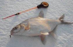 Почти 120 кг рыбы выудили спортсмены-рыболовы на первом этапе ЧМ в Беларуси