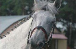 1 марта Республиканский центр олимпийской подготовки по конному спорту и коневодству приглашает всех на Масленицу