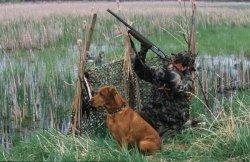 В Таможенном союзе будет введен единый евразийский охотничий билет