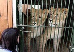 Семь животных погибли при пожаре в минском зоопарке