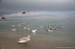 Крым: «Пока только птицы ходят по пляжам, прилетят ли туристы?»