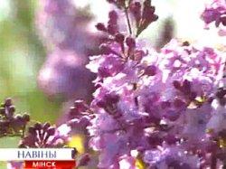 Центральный ботанический сад города приглашает на Неделю сирени
