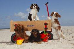 В Римини открылся пляж для собак