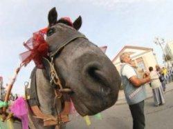 Первый день Анненской ярмарки посвятят водным развлечениям
