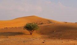 Правитель Дубая издал указ об открытии в эмирате шести новых заповедников