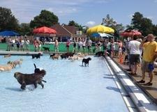 В Испании откроется аквапарк для собак