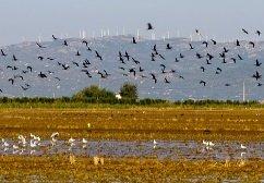 Международный фестиваль будет продвигать дельту Эбро в качестве места наблюдения за птицами