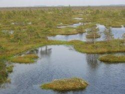Туристы смогут протестировать болотоступы на новой экотропе в заказнике «Ельня»
