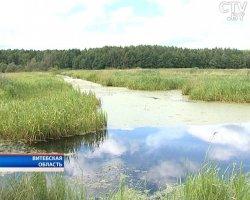 Новый экомаршрут появился в Беларуси: тропа пролегает через болото ландшафтного заказника «Ельня»