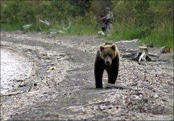 В Красноярском крае на палатку туристов напал голодный медведь