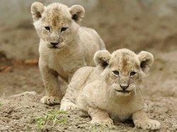 Минский зоопарк выпустил фотоальбом о своих питомцах