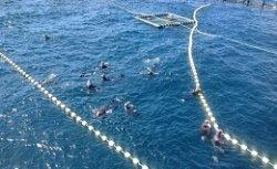 В Таррагоне предлагают искупаться в обществе тунцов