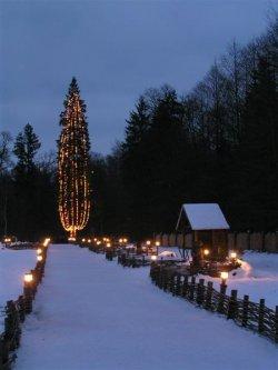 В поместье Деда Мороза срубили 150-летнюю новогоднюю ель