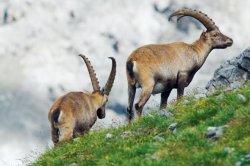 Швейцария отметила столетие национального парка