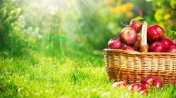 В ответ на санкции России Air Moldova включила яблоки в бортовое питание