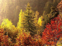 Откройте для себя очарование осени в Альпах!