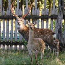В Кобринском районе находится уникальный олений заповедник