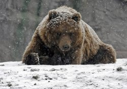 Медведь загрыз 22-летнего туриста в заповеднике под Нью-Йорком