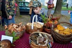 В Поречье прошел праздник лисичек (+ фото)