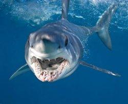 В Австралии акула откусила 23-летнему серфингисту обе руки