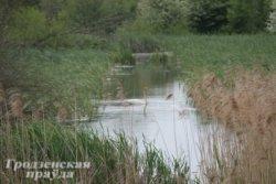 Пять тысяч гектаров долины реки Свислочь станут заказником