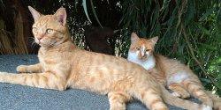 Территорию турецкого отеля Sheraton Adana теперь охраняют кошки