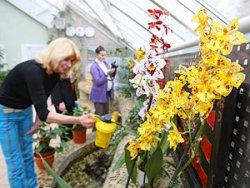 6–9 ноября на выставке в Центральном ботаническом саду будут представлены редкие орхидеи