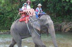 В Таиланде обезумевший слон убежал в джунгли с российскими туристами на спине
