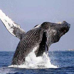 Наблюдение миграции бабочек и китов в Мексике признано лучшим путешествием по мнению National Geographic