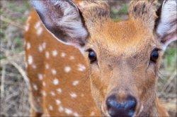 Жировичскому монастырю подарили муфлона и пятнистого оленя
