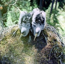 Березинский биосферный заповедник: итоги работы отдела туризма, лесного отдела и отдела охраны