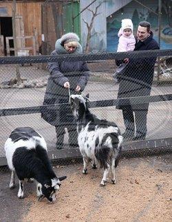 Козы станут достопримечательностью Витебского зоопарка в 2015 году