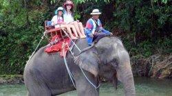 В Таиланде слон, насмерть затоптав вожатого, сбежал с двумя россиянками в джунгли