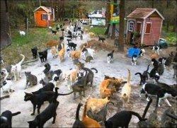 В Японии существует популярный туристический остров кошек