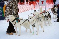 Поклонники «Завирухи» будут разочарованы: популярные соревнования этой зимой не состоятся