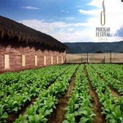В Доминикане для туристов проведут фестиваль любителей сигар