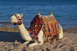Шарм-эль-Шейх - самый безопасный курорт в Египте