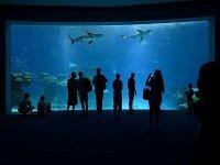 В Эйлате открылся самый большой на Ближнем Востоке бассейн с акулами