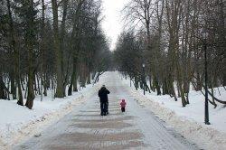 Привидения и маньчжурские абрикосы – что еще можно найти в Лошицком парке?