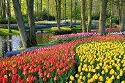 В Нидерландах открывает сезон парк Кёкенхоф