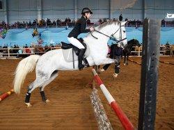 В Минске прошла международная выставка лошадей